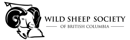 Wild Sheep Society of British Columbia | Wild Sheep Conservation