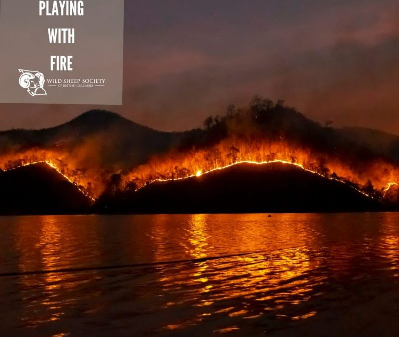 EP 36: Playing with Fire with John Davies – RPF