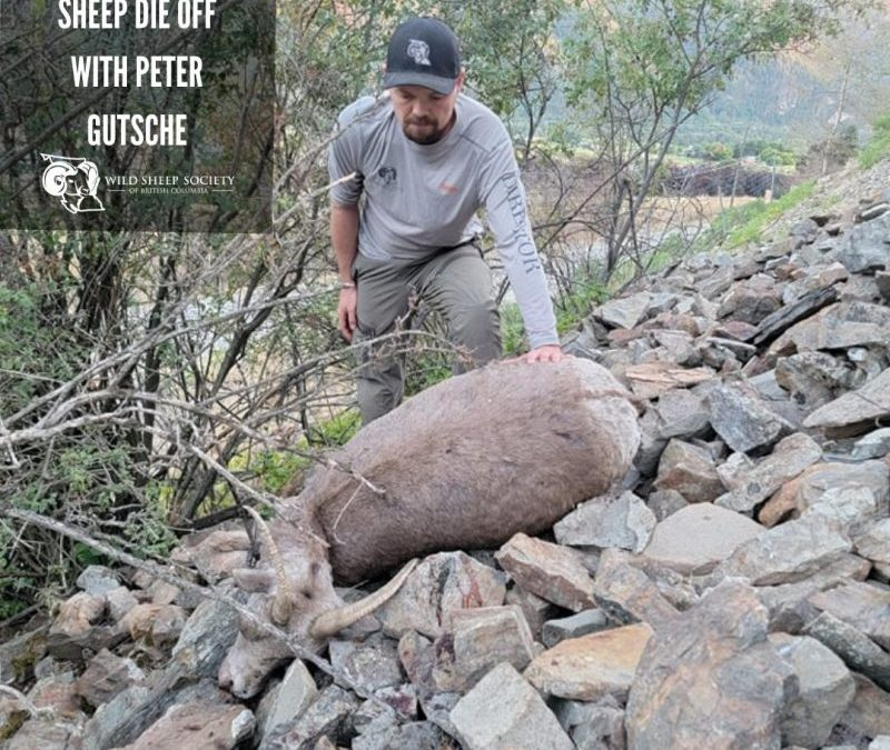 EP 41: The Grand Forks Sheep Die Off with Peter Gutsche